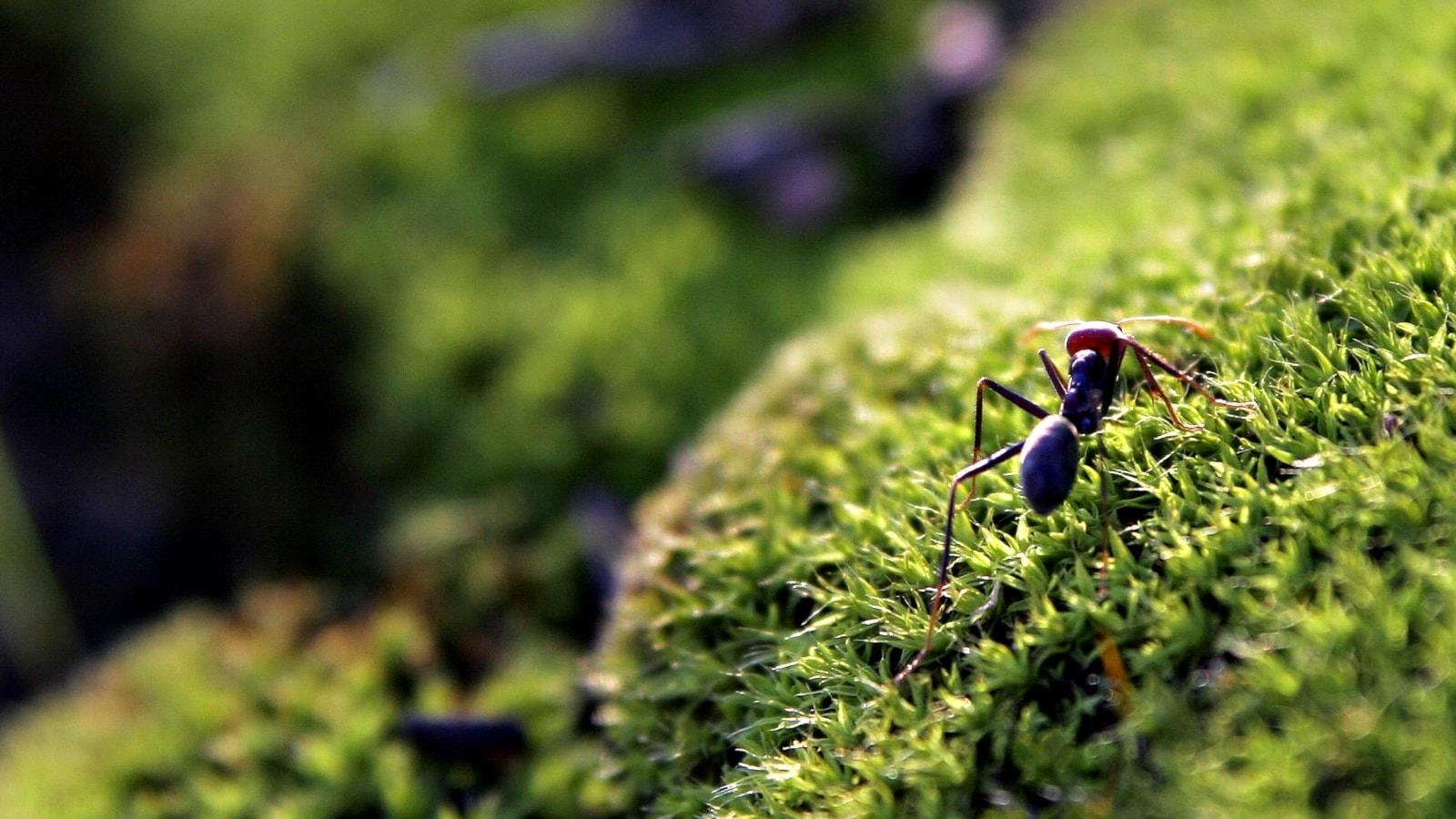 Myllrande myror, gigantiska gåsgamar och nytt om nyckelbiotoperna