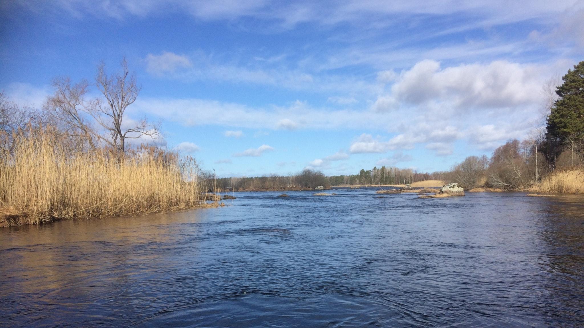 Hem till skogsägaren - och en tur till artrika Färnebofjärden