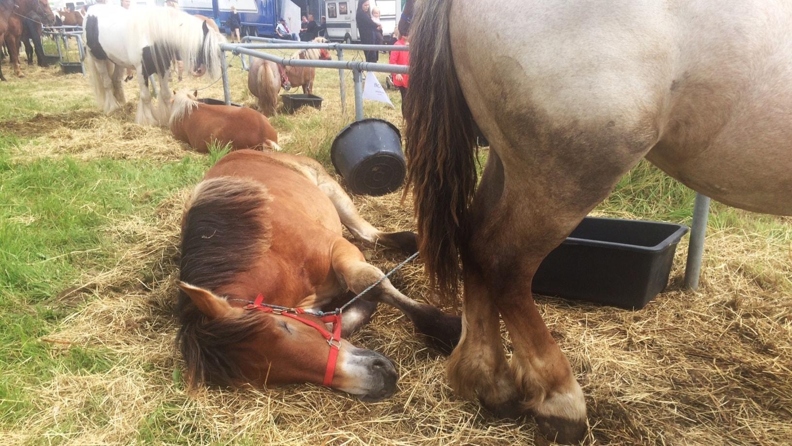 De trasiga hästarna och den goda gärningen