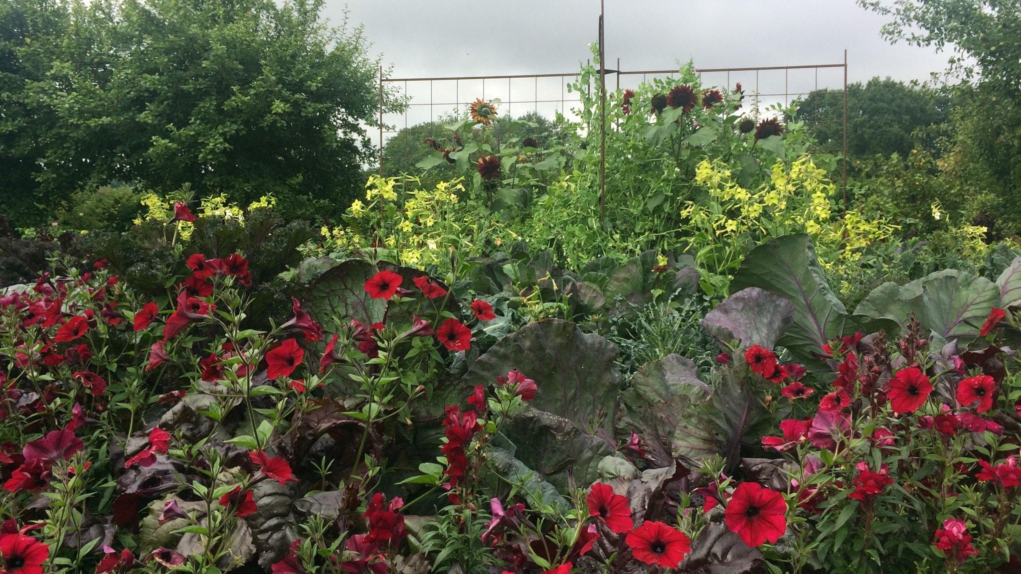 Potager - dekorativ köksträdgård med  både blommor och ätbart