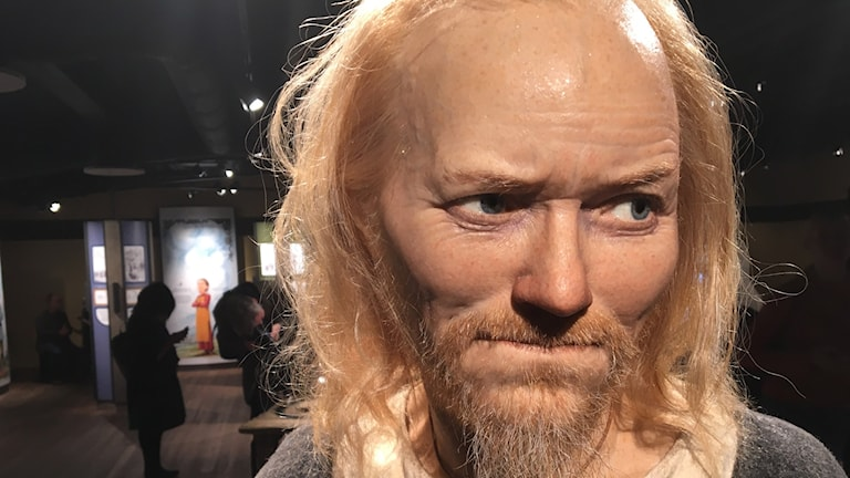 A Viking from the 10th century recreated using DNA from Viking bones found in Sigtuna. He is on display at the new Vikingaliv museum, which opens in Stockholm on Friday.