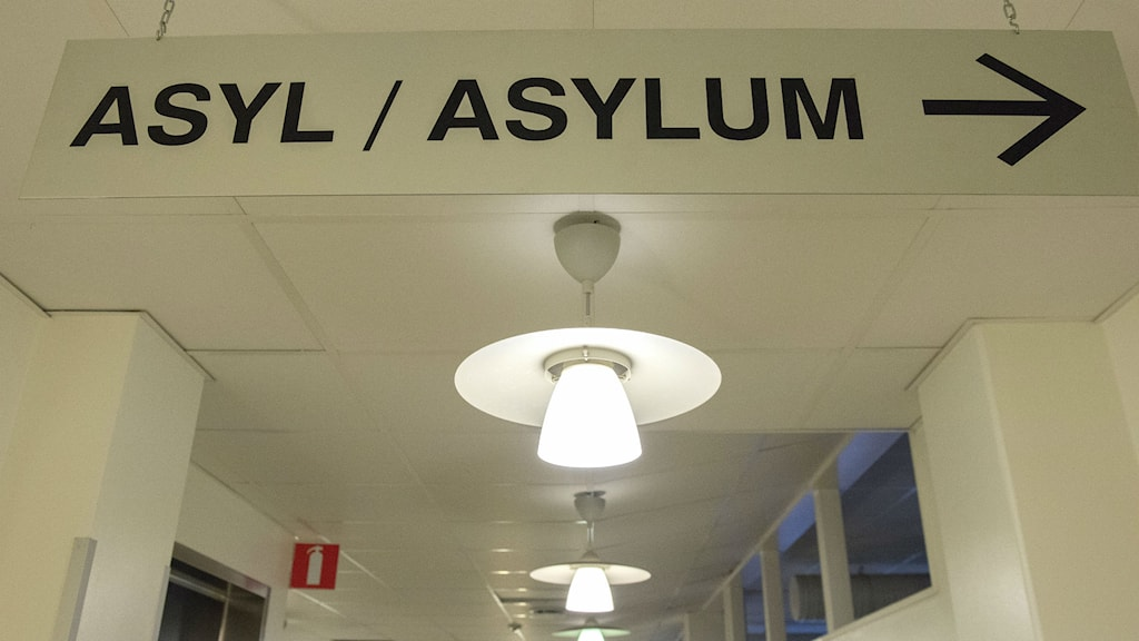 More people are expected to apply for asylum in Sweden next year. Photo: Maja Suslin/TT
