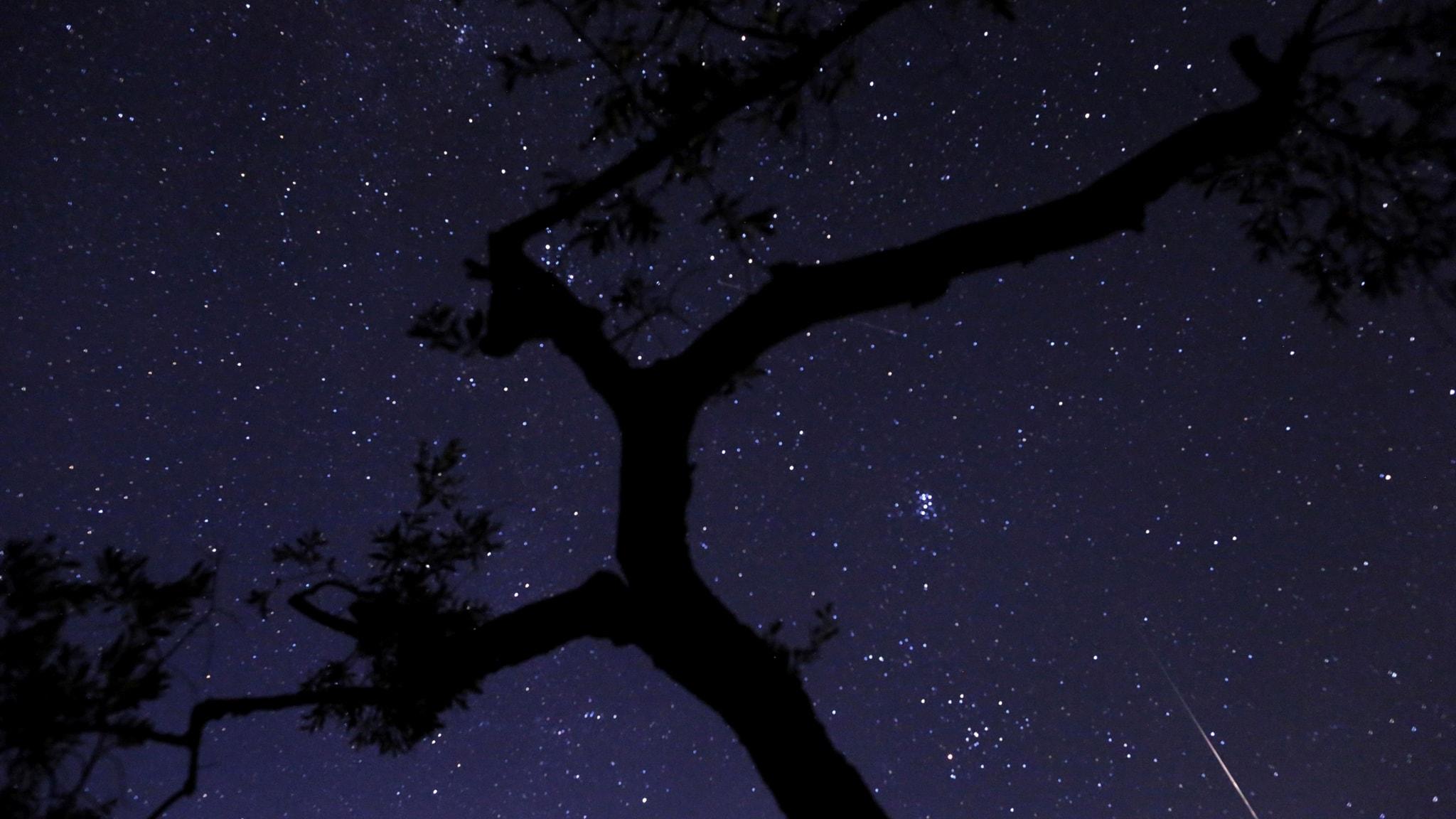 Sånger om stjärnan