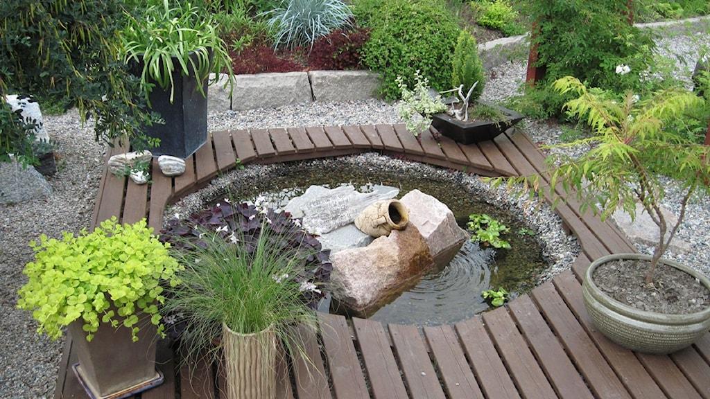 Trädgård trädgård damm : En grön oas utanför husknuten - Eftermiddag i P4 Norrbotten ...