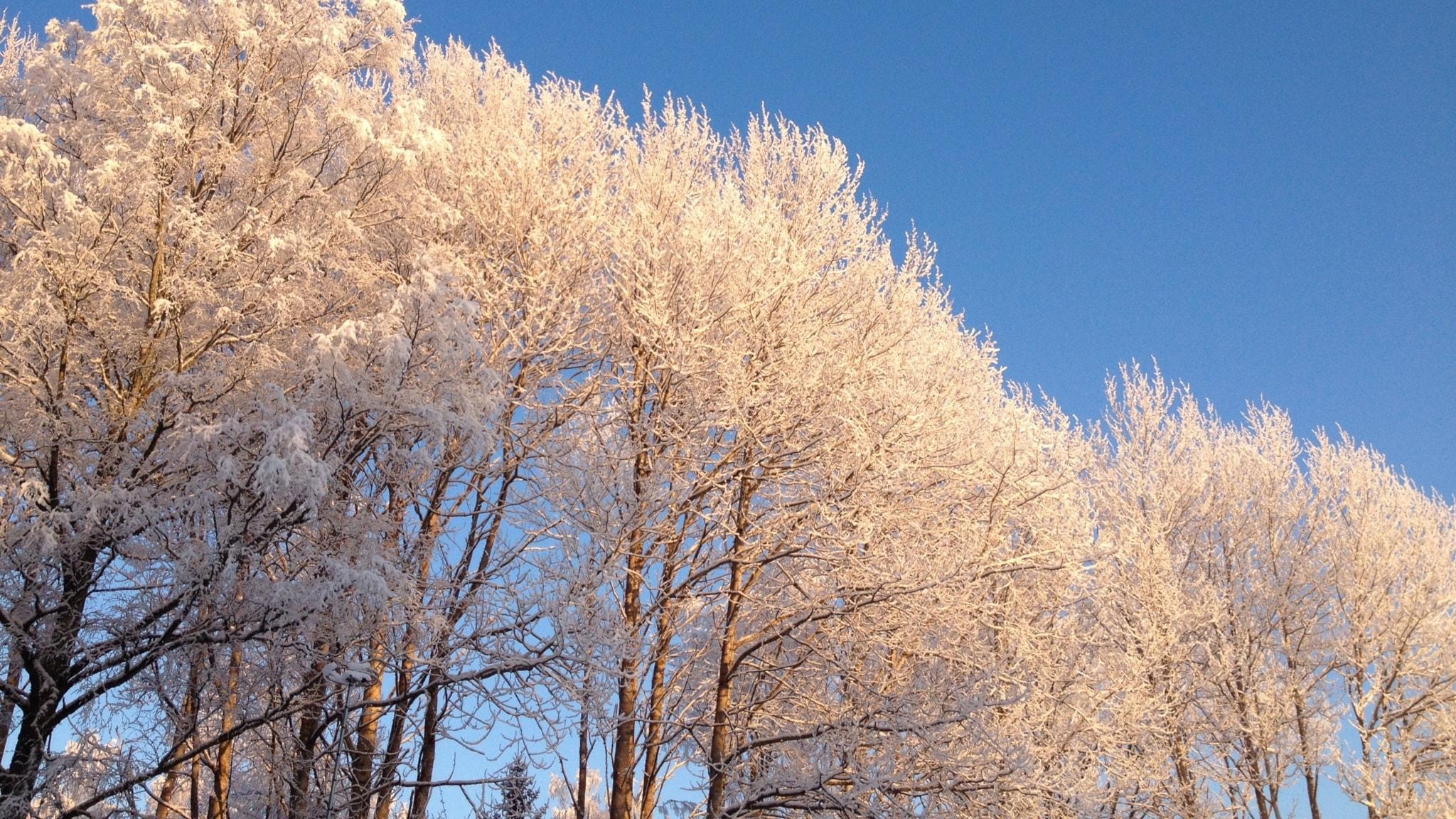 Talvisia lauluja