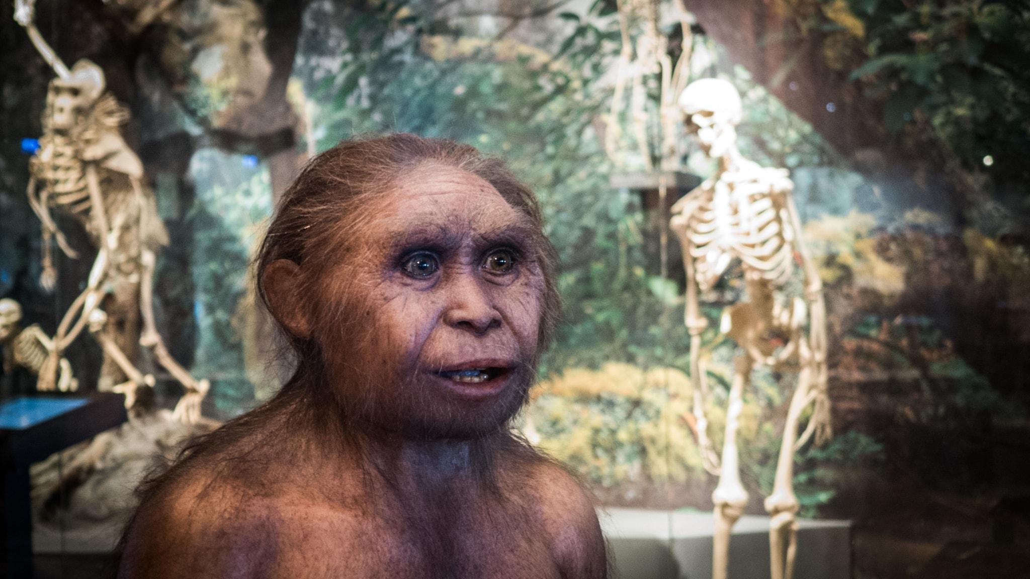 Nya fynd ändrar bilden av vår evolution