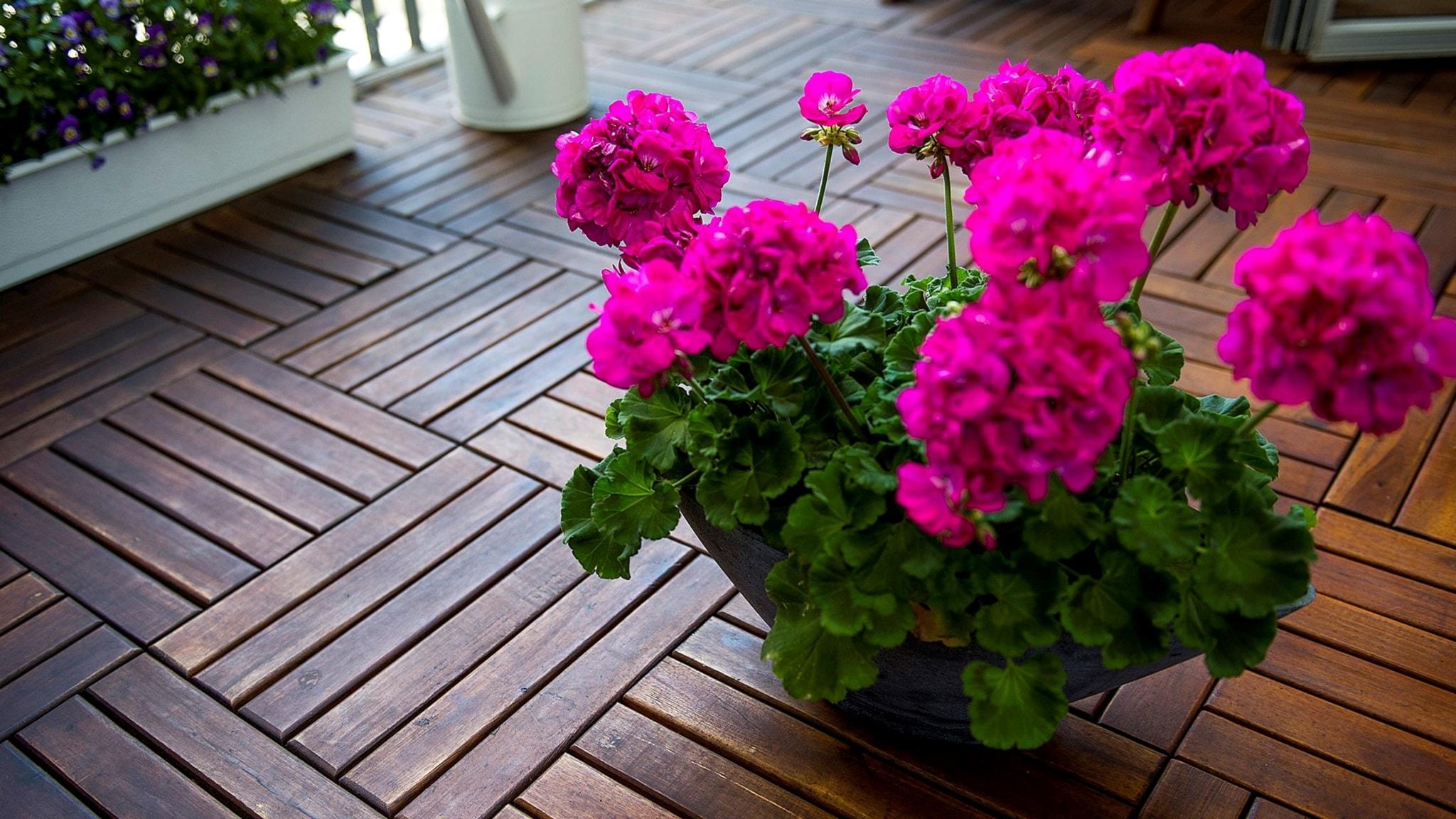 Tillväxthämningsmedel i krukväxter farligt för komposten - spela