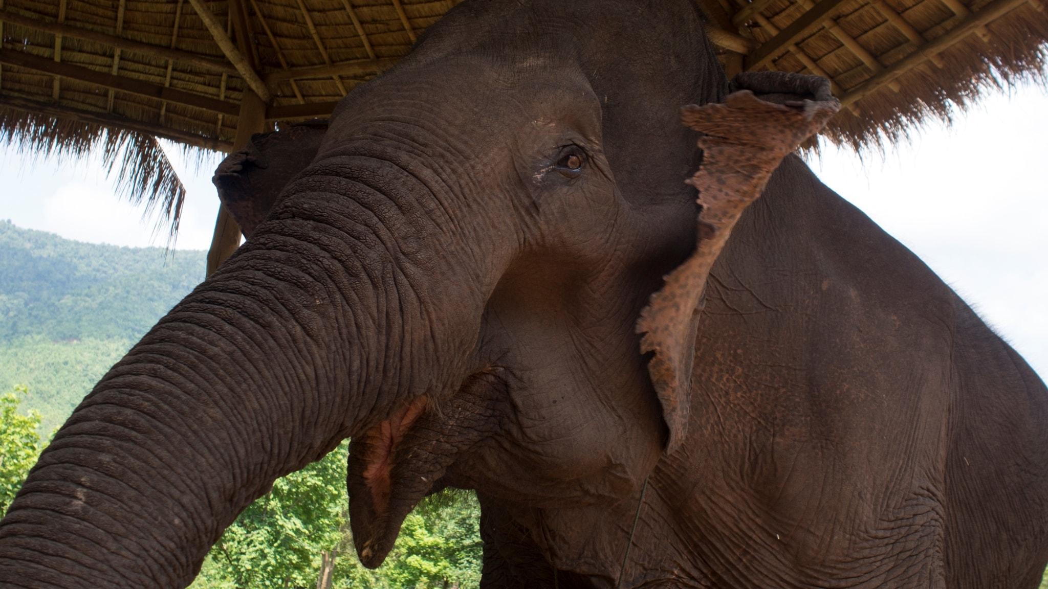 Årsdagen för kuppförsöket i Turkiet, Burmas elefanter har blivit arbetslösa, kanadensisk högerextremism, den hippa och spirande växttrenden.