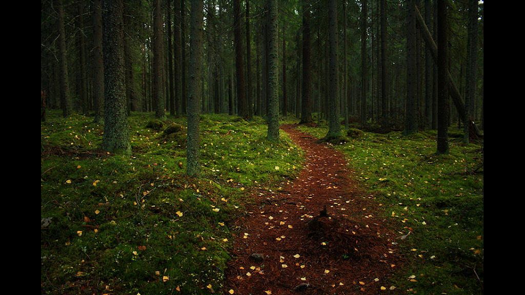 Foto: Miguel Virkkunen Carvalho Flickr Creative Commons