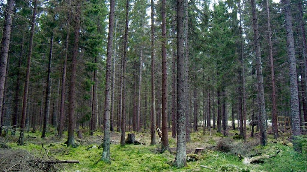 skogsmark