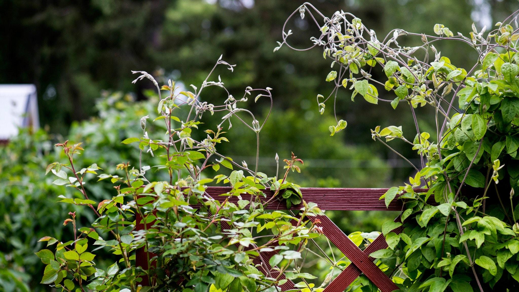 trädgårdsutbildning