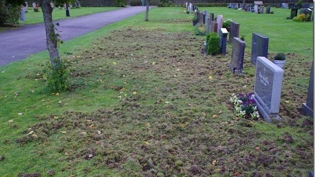 förstörda gräsmattor på Skene kyrkogård.