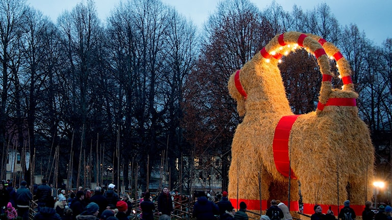 Den traditionella julbocken i Gävle invigdes 29 november. Foto: Mats Åstrand/TT.