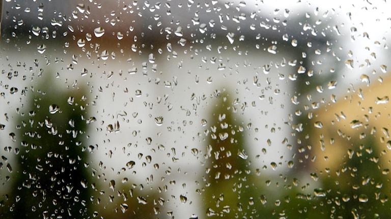 Regndroppar på en fönsterruta