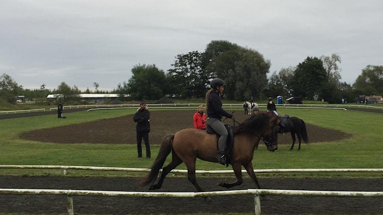 Ryttare på häst