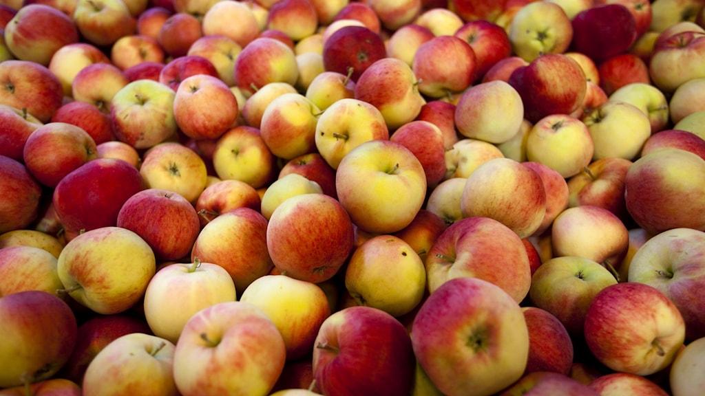 en massa äpplen