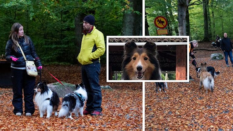 Hunden Leela