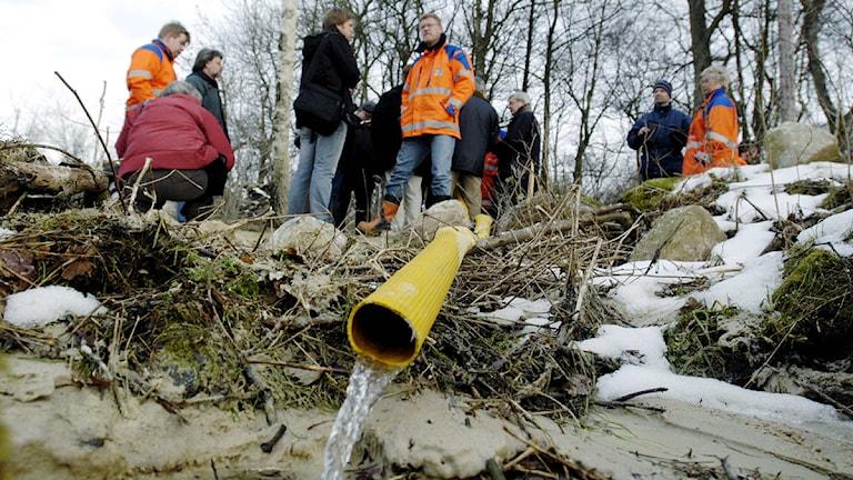En vattenslang på Hallandsåsen. Foto: Stefan Lindblom/Scanpix