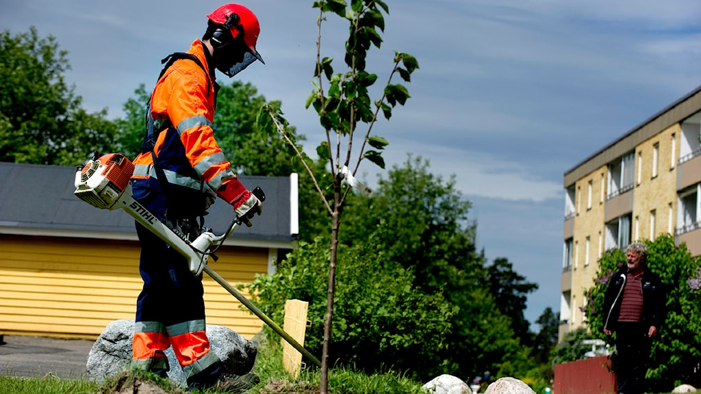 En ung man klipper gräset i Tumba med en grästrimmer. Foto: Pontus Lundahl/Sveriges Radio