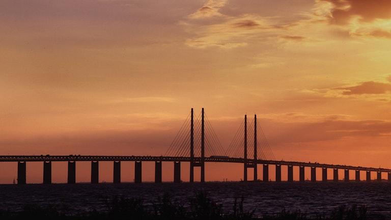 Öresundsbron i solnedgång