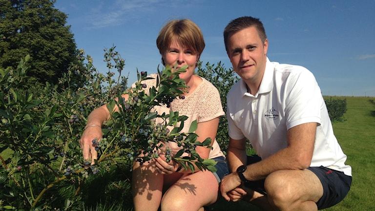Anneli och Per Assarsson odlar egna blåbär.