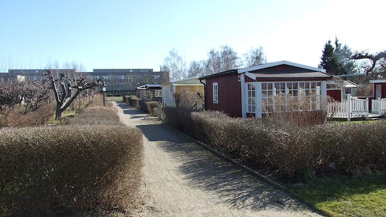 Koloniområdet Sommarstaden i Kristianstad. Foto: Rickard Sturesson/Sveriges Radio