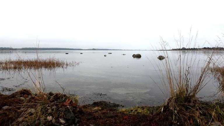 Östersjöns undervattensväxter ger bättre badvatten. Bilden är från skärgården utanför Landön.