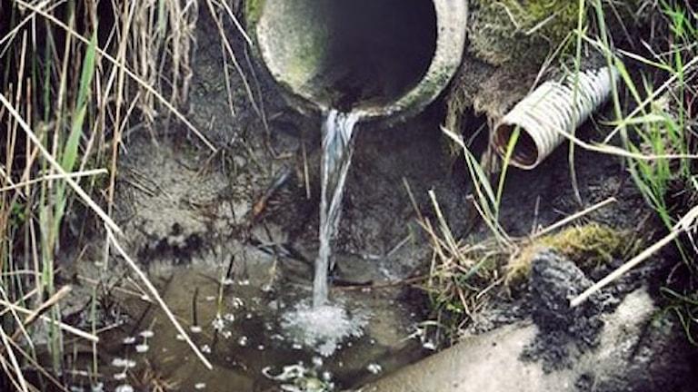 Smålandsvägen i Örkelljunga drabbas med jämna mellanrum av avloppsvatten och avföring som trycks upp genom golvbrunnen.
