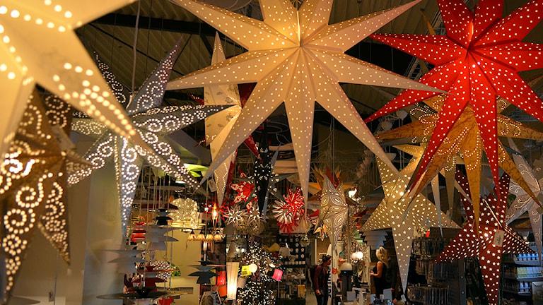 Julstjärnor i alla dess former. Foto: Per Lundberg/Sveriges Radio