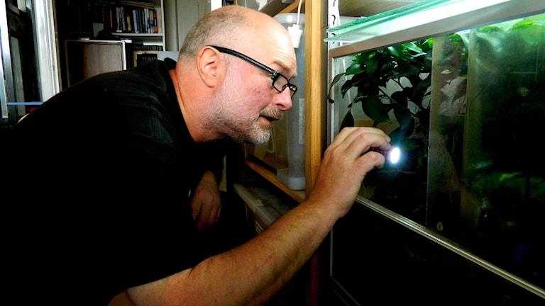 Tony Andersson i Kristianstad har lägenheten full av 100-tals olika insekter och kräldjur.