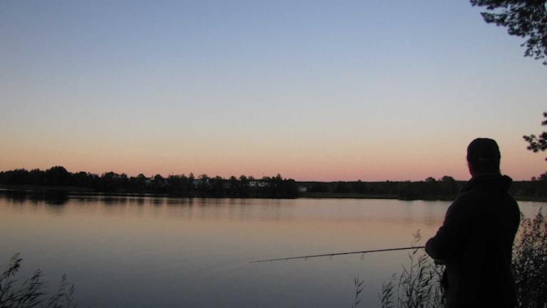 Fiskare fiskar sjö. Foto: Monica Elfström/Sveriges Radio