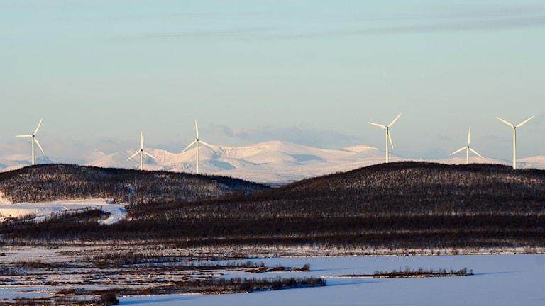 Vindkraftverk på fjäll. Foto: Lars Pehrson/TT