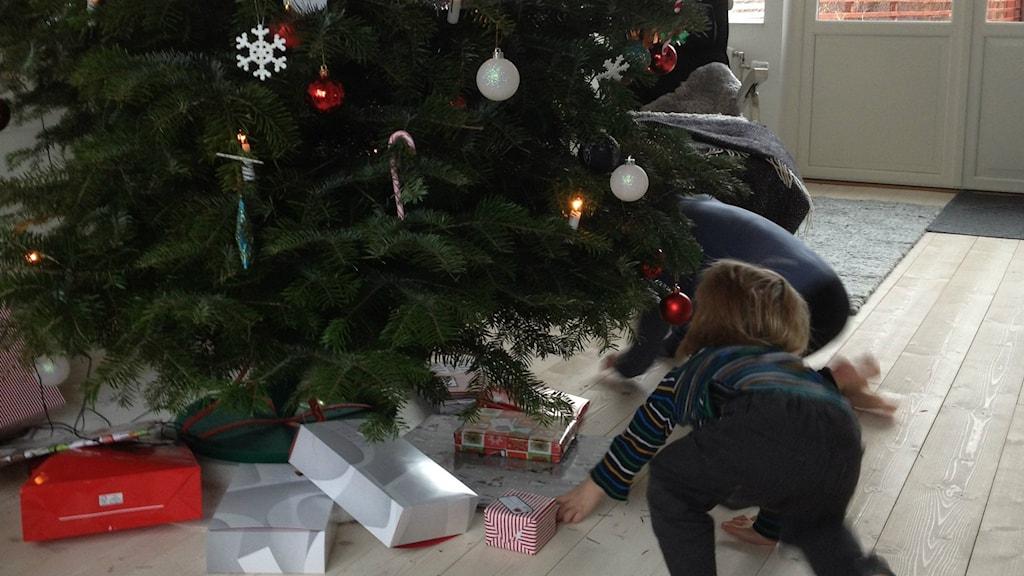 Paketen under granen är för en del en viktig jultradition. Bild: Jenny Sandgren/Sveriges Radio.