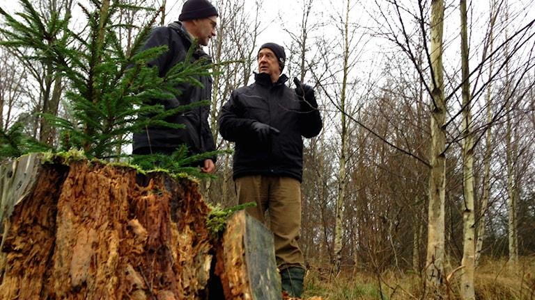 Skogskonsulent på Skogsstyrelsen Skåne