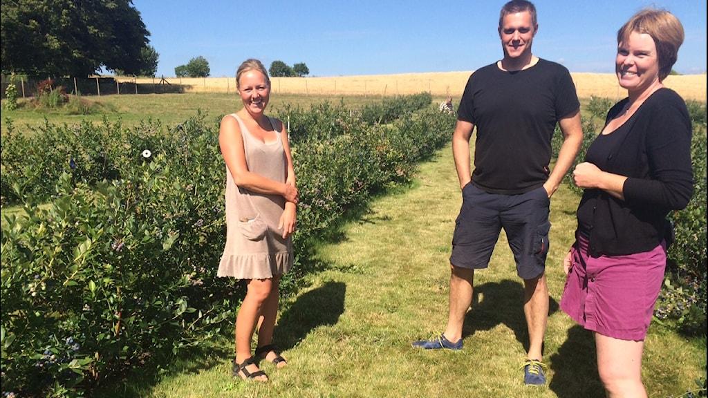Åsa Önneflod, Per Assarsson och Annelie Assarsson erbjuder självplock av blåbär på Österlen. Foto: Malin Rimfors/Sveriges Radio