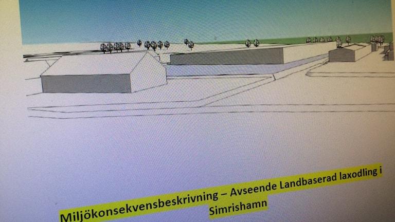Enligt MKB:n ser laxodlingen ut så här. Foto:Malin Rimfors/Sveriges Radio