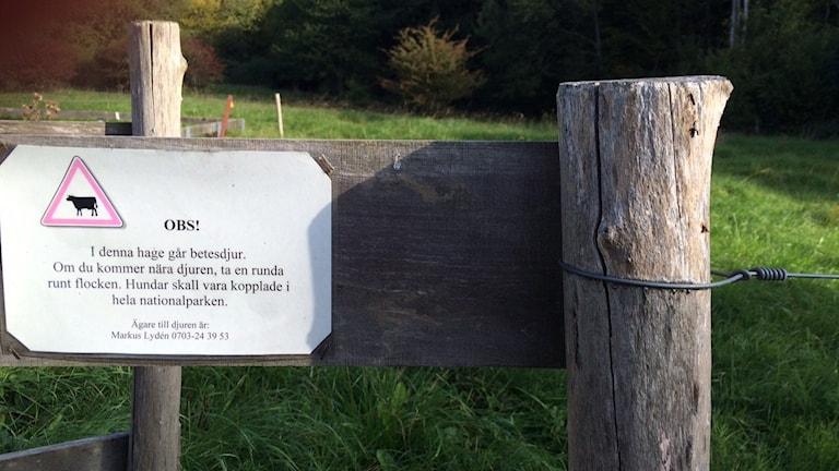 Så här ser varningskyltarna ut när man kliver in i en beteshage i Stenshuvuds Nationalpark. Foto: Malin Rimfors/Sveriges Radio