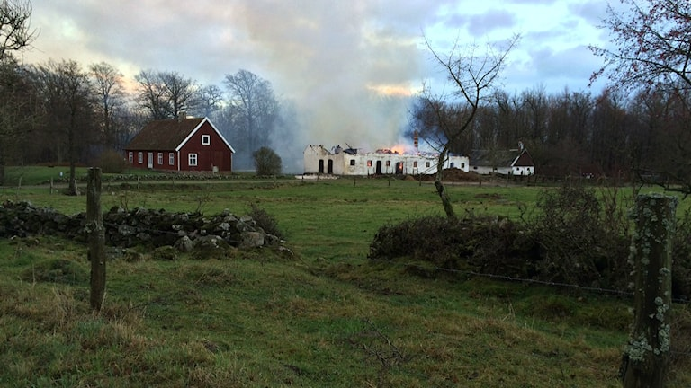 Brand i ladugård. Foto: Malin Rimfors/Sveriges Radio