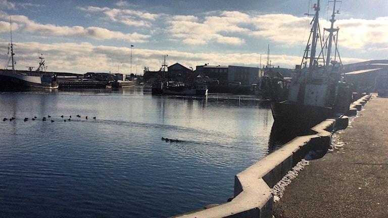 Fiskebåtar i Simrishamns hamn