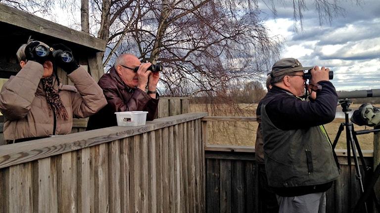 Fågelskådare spanar efter tranor vid Pulken.