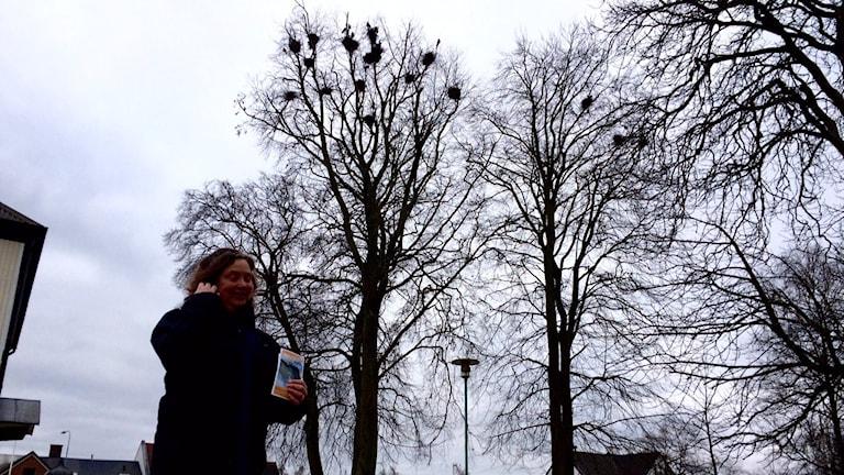 Råkorna ser ner på kommunekolog Charlotte Lindström i Tomelilla Folkets park.
