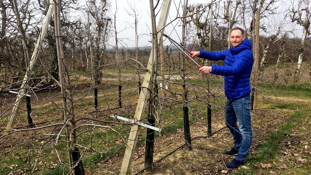 Det är lättare att beskära äppelträden innan bladen slagit ut, säger Henrik Stridh.