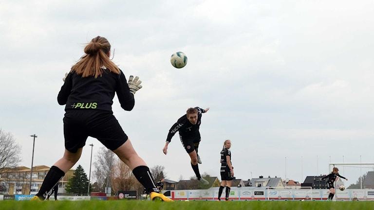 Tisdagens träning var KDFF:s första för säsongen på riktigt gräs.