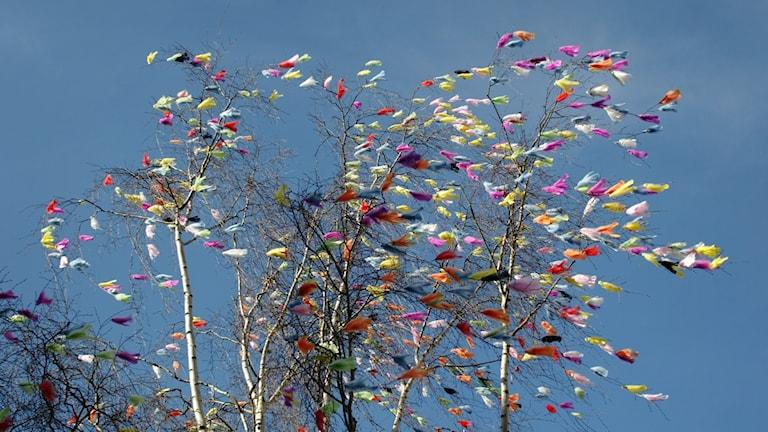 Påskfjädrar i ett träd som det blåser i.