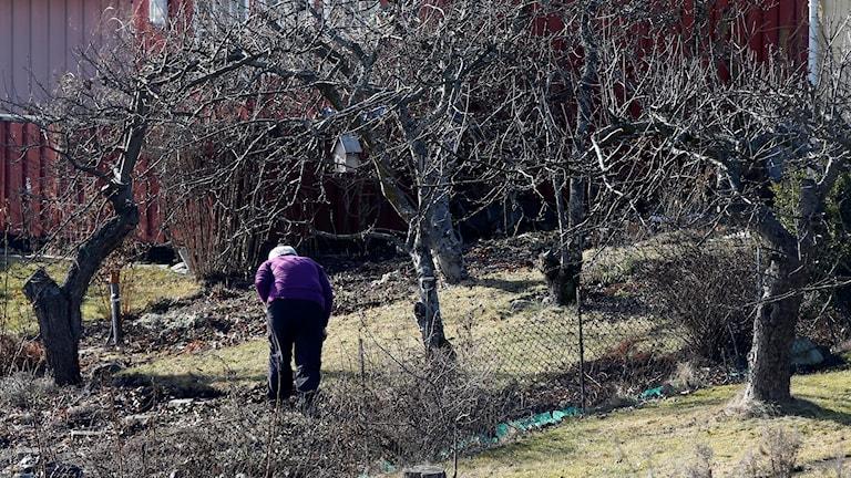 Människa i en vårlig trädgård
