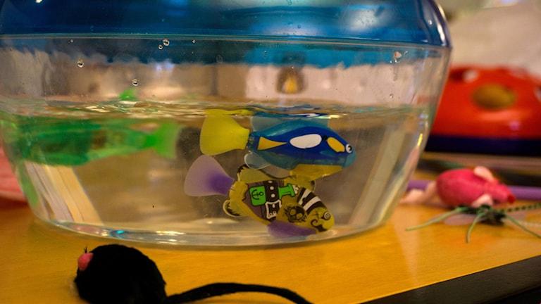 Mekaniska fiskar i ett akvarium, för katten