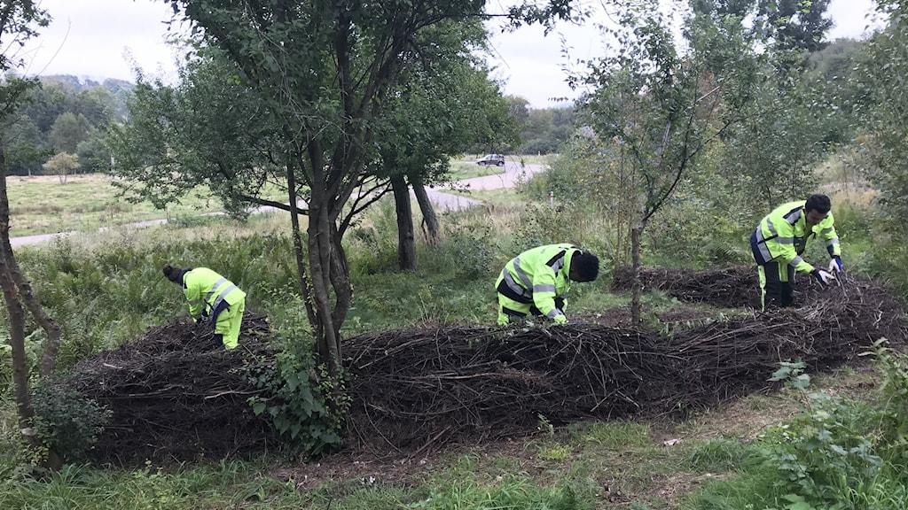Tre ungdomar arbetar i skogen.
