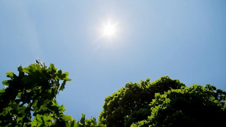 Sol som lyser över gröna trädtoppar.