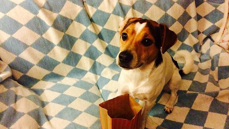 Hund med godispåse