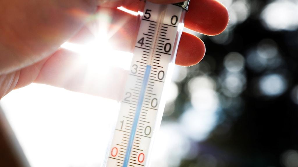Termometer i motljus